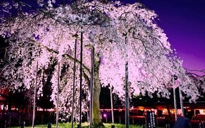arashiyamananoshimakouen